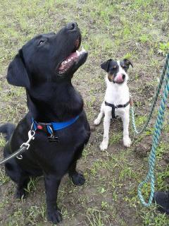 Koiran elekieli ja stressi -seminaari | Koira- ja kissakoulu Heiluva Häntä